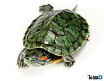 Turtle_zukan01